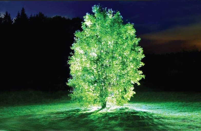 Starlight avatar: The first plant that glows in the dark